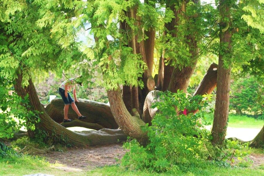 L'arbre à jeux