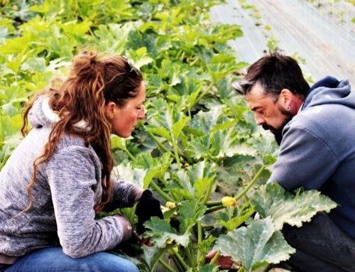 Des légumes Bio et locaux au Camping!